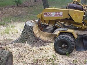 Once a tree had been felled there is always the problem of tree stumps, we can remove unwanted tree stumps by way of our machinerey and we can carry out this service in Anglesey and north wales
